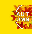 autumn background template with falling bunch of vector image