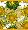 blooming yellow sunflowers and unblown green vector image