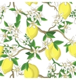 Floral pattern with lemons and white flowers vector image