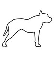 pit bull terrier icon black color flat style vector image vector image