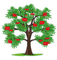 tree rowanberry and ripe berries on branch vector image vector image