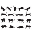 black tiger silhouettes vector image vector image