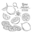 lime fruits set vector image