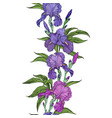 beautiful flowers iris seamless border vector image vector image