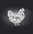 chicken hen scheme diagram chart vector image