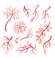 human eye veins red capillaries blood arteries vector image