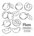 plum fruits set vector image vector image