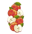 Apple isolated composition vector image vector image
