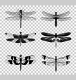 black dragonfly icons set isolated on vector image vector image