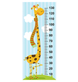 long neck giraffe height measure vector image vector image