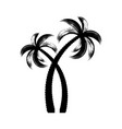 black palm trees brush stroke design vector image