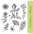 boho style flower vector image vector image