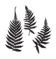 isolated fern leaves set vector image vector image