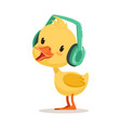 little yellow duck chick listening to music on vector image vector image