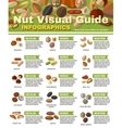 Nuts Infographics Set vector image