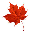 orange maple leaf isolated on white background vector image vector image