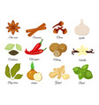 set of different spices star anise cinnamon vector image vector image