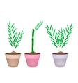 Three Bamboo Tree in Ceramic Flower Pots vector image