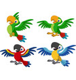 cartoon macaw collection set vector image vector image