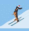 dachshund descends hillside on skis vector image vector image