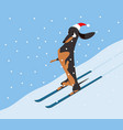 Dachshund descends the hillside on skis