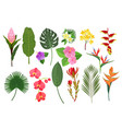 decorative exotic flowers botanical leaf tropical vector image vector image