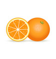 fresh orange in realistic style vector image vector image