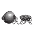 Tick vintage engraving vector image vector image