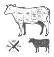 american cuts beef vector image vector image