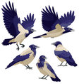 Crows on white background vector image vector image