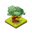 green beech tree isometric 3d icon vector image vector image