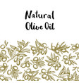Hand drawn olive branches background vector image