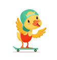 little yellow duck chick in blue cap skateboarding vector image vector image