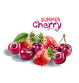strawberry and cherry watercolor summer season vector image vector image