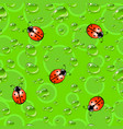 seamless texture with ladybugs and dew drops vector image vector image