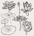 set of Beautiful monochrome hand drawn lotus vector image vector image