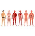 cartoon color human body anatomy set vector image vector image