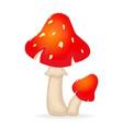 cartoon red mushrooms isolated on white background vector image