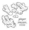 ginger set vector image vector image