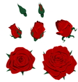 Isolated Roses vector image vector image