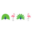 peacock pink flamingo set line feather out open vector image