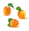 apricot set collection of realistic 3d vector image vector image