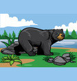 black bear in the nature vector image vector image