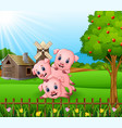 cartoon three little pigs playing in the farm back vector image vector image