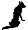 wild wolf vector image