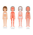 woman muscular skeleton and blood systems struct vector image vector image