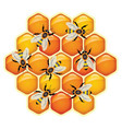 working bees on honeycomb cells vector image vector image
