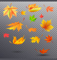 bright autumn fallen maple leaves vector image