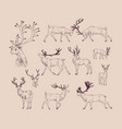 collection of drawings of deer in various poses vector image vector image