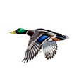 duck from a splash watercolor colored drawing vector image vector image